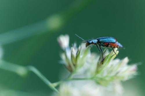 Petit scarabée, lumière naturelle